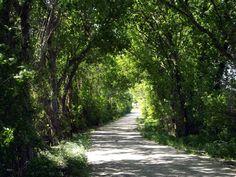 (1) Bluebonnet Trails
