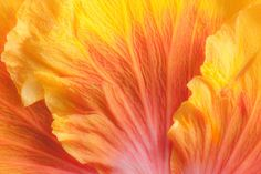abstract tropical hybiscus macro fine art nature photography Car ...