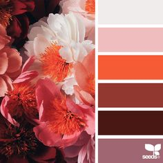 Nature-Inspired Color Palettes AKA Design Seeds For Designers,... ❤ liked on Polyvore featuring design seeds