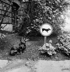 netherlands 1957 | foto: eddy de jongh