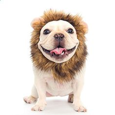 Dogloveit Pet Costume Lion Mane Wig for Dog Cat Halloween Dress up with Ears. More descripiton on the website.