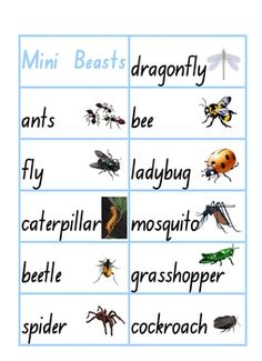 From Clever Classroom on TpT. Insects and Mini Beasts Word Wall - PDF file5 page, themed word wall resource.26 picture and word cards and33 words with no pictures such...
