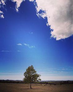 Tree  #igerscroatia #igershrvatska #croatia #hrvatska #kamenjak #ig_europe #ig_shotz #vscocam #vscoeurope #vsco #instadaily #photooftheday #instagramers #instagood #tree #drzewo #baum #chmura #krajobraz  #canon #fotografia #photography #photographysouls #chorwacja