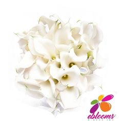 Bridesmaid Mini Callas More colors available - EbloomsDirect Calla Lily Flowers, Calla Lily Bouquet, White Flowers, Lily Meaning, Classic Romantic Wedding, Bulk Flowers Online, Zantedeschia, Oriental Lily, Types Of Flowers