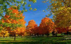 1920x1200 Wallpaper trees, park, autumn, grass, leaves