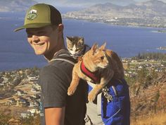 Cat Video: Two Cats Who Love Adventure Hiking. This video will get you wanting to be in the great outdoors, and maybe with just the right cat! Meet a young man and his two hiking feline companions! 22 million views! www.catfaeries.com/videos/2017/04/26/cat-video-two-cats-who-love-adventure-hiking/ - www.catfaeries.com - Products for good behavior & health for the modern housecat. #cat #cats #catvideo #orangetabby #tabby