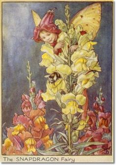 The snapdragon fairy - Fata della bocca di leone; Cicely Mary Barker