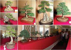 #bonsai #durban_bonsai_show