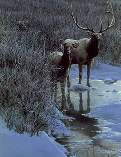 Animalistic Robert Bateman painting (686 works)