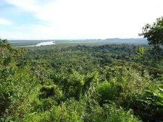 Los Katíos National Park - Extending over 72,000 ha in north-western Colombia, Los Katios National Park comprises low hills, forests and humid plains. An exceptional biological diversity is found in the park, which is home to many threatened animal species, as well as many endemic plants.