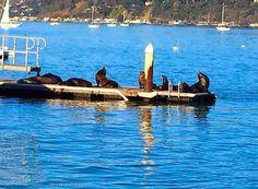 Disfrutamos de días estupendos #Molyvade...#silbandoaltrabajar #SanFrancisco #SAUSALITO #PININO #seals ¿Que te ha parecido? molyvade.blogspot.com