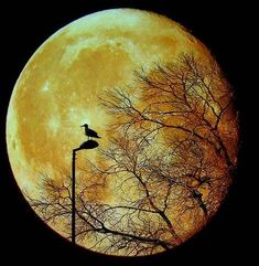 isn't it supposed to be a MAN in the moon? not a bird!