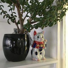 "Our new office #maneki-neko #招き猫 literally ""beckoning cat"" from @jpbooks We love her"