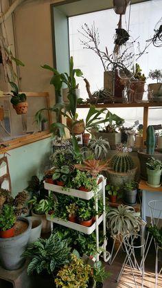Room With Plants, House Plants Decor, Plant Decor, Plant Aesthetic, Aesthetic Room Decor, Room Ideas Bedroom, Bedroom Decor, Passion Deco, Indie Room