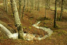 Situado muy cerca de los Pirineos, es uno de los mayores hayedos de Europa. Aunque puede recorrerse durante todo el año, en otoño es realmente impresionante y costará elegir uno solo de los recorridos que pueden realizarse, bien a pie o en bicicleta de montaña. O perderse a propósito para disfrutar de esta maravilla de la naturaleza que fascinó hasta el mismísimo Ernest Hemingway, quien acudía cada año a la selva de Irati al terminar los sanfermines. Quién sabe si una musa del bosque inspiró…