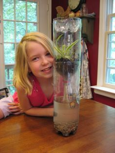 Ecocolumn - Love this. In my 6th grade class made these and they worked so great. It was very educational.