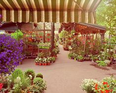 Flower Market, Pergola, Outdoor Structures, Marketing, Wall Art, Flowers, Royal Icing Flowers, Arbors, Floral