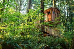 you can sleep in a treehouse at Treehouse Point in Washington state