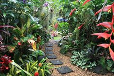 Dennis Hundscheidt's tropical garden | Best tropical gardens in Brisbane | Photo Galleries and News Photos | News Pictures and Photos | The Courier-Mail