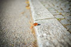Butterfly in the City by Drasko Stojadinovic on Sigma Lenses, Butterfly, City, Image, Destinations, Viajes, Cities, Butterflies