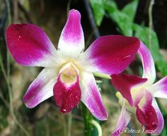 orchid.   Smell the flowers.com