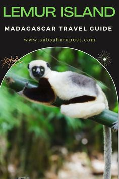 Madagascar, the fourth-largest island on earth is a place like no other – a destination of bizarre topography, amazing people, and a huge list of species found nowhere else on this world.If this island is top on your bucket list, check out this guide that will help you plan your holiday with ease. Here you'll learn about Africa travel,Africa travel destinations, Africa travel & Africa travel photography. #travelafrica #africatravel #travelsouthafric African Map, African Safari, African History, Dream Photography, Wildlife Photography, Travel Photography, Best Holiday Destinations, Travel Destinations, Madagascar Travel