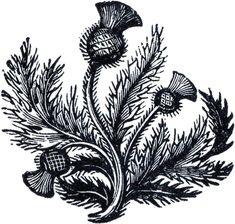 Public Domain Thistle Image - The Graphics Fairy