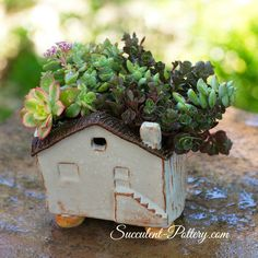 Clay house with succulents