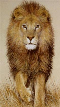 Lion Animation