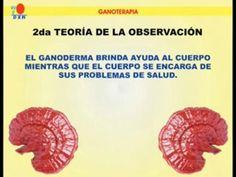 """Ganoterapia es el tratamiento natural con Ganoderma Lucidum, el hongo rojo, también conocido en Japón como Reishi   MEDICINA DE REYES-GANODERMA LUCIDUM """"REISHI"""""""