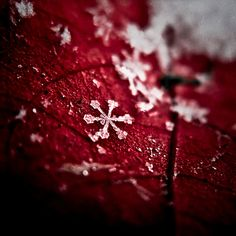 ** winter's red.