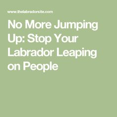 No More Jumping Up: Stop Your Labrador Leaping on People
