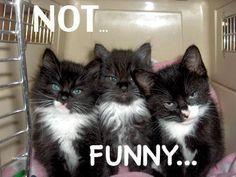 Sooo not funnyyyy...