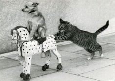 cat, dog, horse... go!