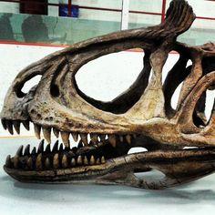 Cryolophosaurus Tricyclus by ChristianPearce on DeviantArt