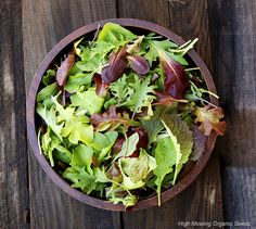 Grow your own salad mix! Seeds can be sown as soon as the soil can be worked, and 28 days later you'll have your own home-grown salad!