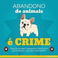 #abandonoécrime  #euprotejo  #amoanimais  #cachorro  #gato