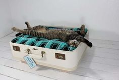 diy suitcase pet bed