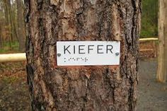 Bildergebnis für walderleben kinder Kletternetz Decor, Children Toys, Woodland Forest, Pictures, Decoration, Decorating, Deco