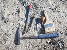Fossil Collecting Tools How To Collect Fossils