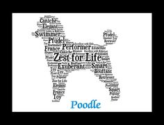 The Poodle, though often equated to the beauty with no brains, is exceptionally smart, active and excels in obedience training. The breed comes in three size varieties, which may contribute to why Poodle is one of the most popular breeds according to AKC® Registration statistics. Poodles can be a variety of solid colors, including white, black, apricot and gray, but never parti-colored.  Whether you are looking for an Poodle artwork, an Poodle print or an Poodle gift for yourself or an…