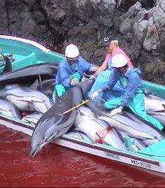 Help STOP the brutal Taiji dolphin slaughter in Japan!  Urge the Int'l Olympic Committee NOT TO consider Japan's Tokyo 2020 Olympic bid, until the Japanese govt agrees to end the brutal hunt. If Tokyo wants the honour of being an Olympic Host City, Japan must be held accountable by the IOC for allowing this heinous atrocity to continue.  There has been a worldwide outcry condemning this barbaric & archaic hunt.  The IOC can not ignore this. PLZ Sign & Share!
