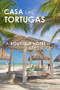When visiting Holbox Island, make sure you stay at Casa Las Tortugas boutique hotel. You'll get the best sea views in the island! Their restaurant offers home made pasta, fresh juices, and fresh baked bread. Need to relax? go ahead and chill out on one of their beach beds. It doesn't get much better than this! via @travel4wildlife