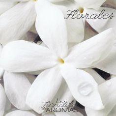 Aromas florales
