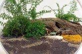 Terriplanty! ferns & moss
