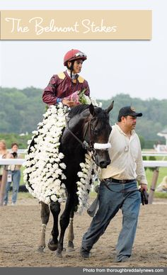 Winner of the Belmont Stakes is draped in a blanket of White Carnations | Belmont Stakes Party Invitations, Tips and Recipes from TheInvitationShop.com