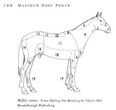 Hoof care reflex zones of the horse, Horse Training, Horse Care, and Riding Books and Videos from Cherry Hill at www.horsekeeping.com