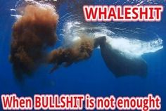 Whale shit, bigger and more unbelievable than bull shit