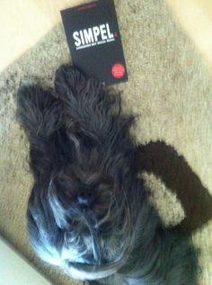 Ellen Schoumacher @ElluhZelluf    Mijn hond leest boeken #simpel Hij zit ook op twitter Volg @Enzootje #simpel