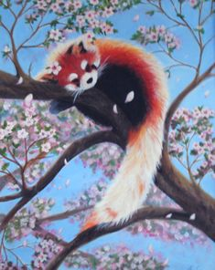 One of my favorite pieces from my high school art classes ^.^ Red panda in a cherry blossom tree, such a wonderful combo heheh. Panda Illustration, Cute Drawings, Animal Drawings, Red Panda Cute, Panda Drawing, Art Mignon, Panda Wallpapers, Panda Art, My Spirit Animal